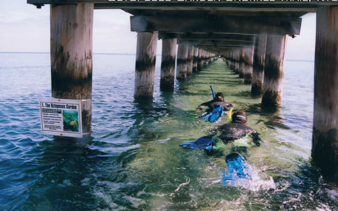 The Octopuses Garden Marine Trail is under the Rye pier – a 5 minute walk from Kanasta Caravan Park